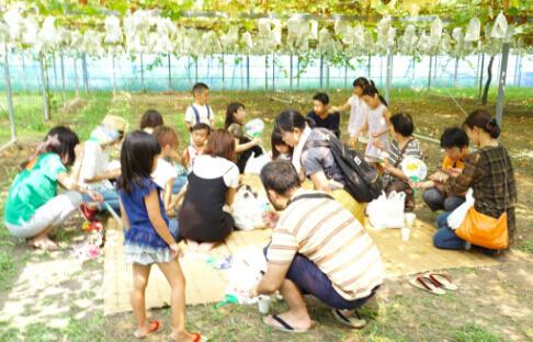 ぶどう狩りのイベントに参加している多くの家族の写真